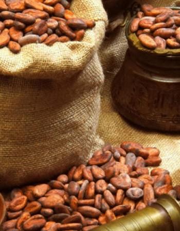 История появления какао и шоколада